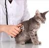 Ветеринарные клиники в Хиславичах